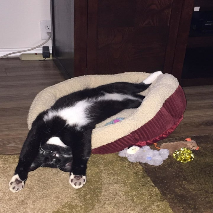 Reviewer photo of their cat relaxing on the bed in its back
