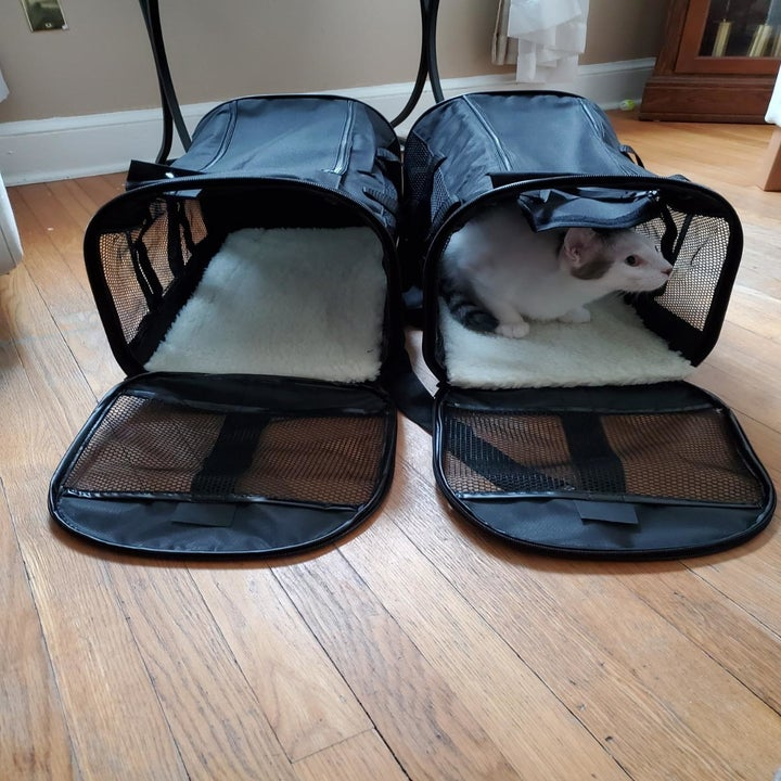 front-facing photo of their cat sitting inside the carrier with some room leftover