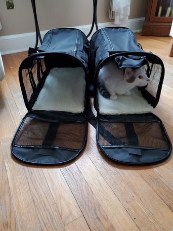 Reviewer's front-facing photo of their cat sitting inside the carrier with some room leftover