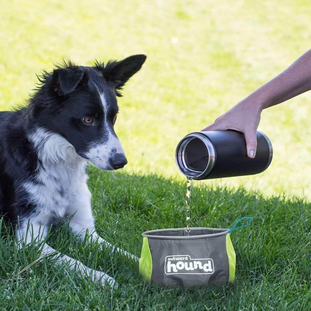 Model's hand pouring water into gray and green water bowl while dog looks on