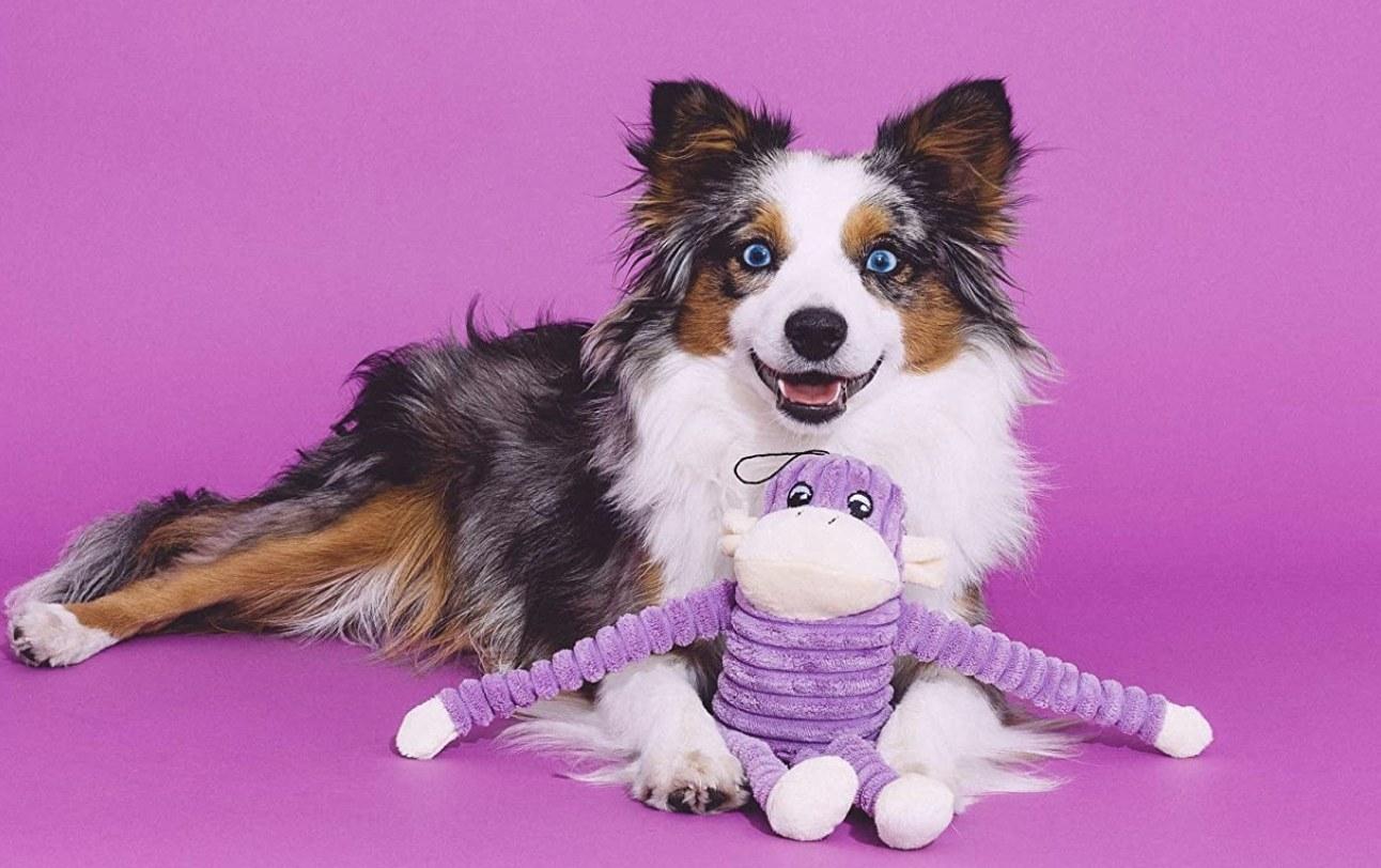 Dog with purple monkey toy