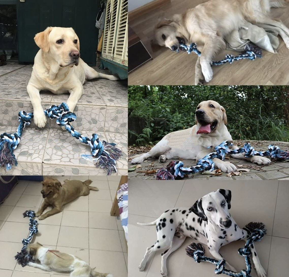 Various dogs with their rope toys