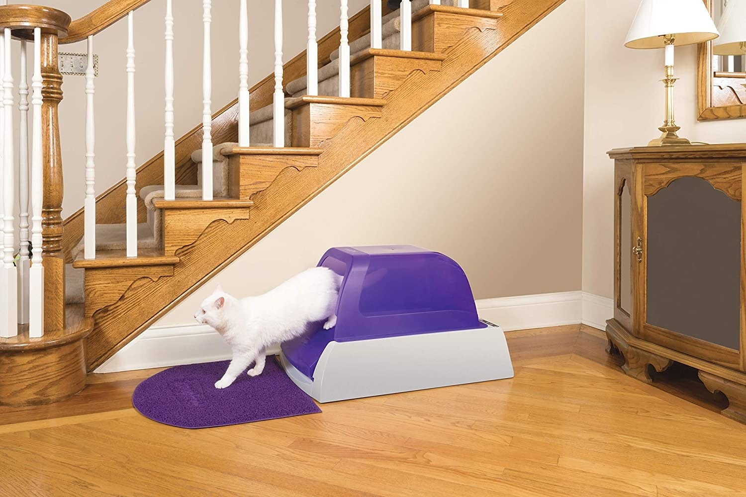 White cat walking out of purple and gray litter box