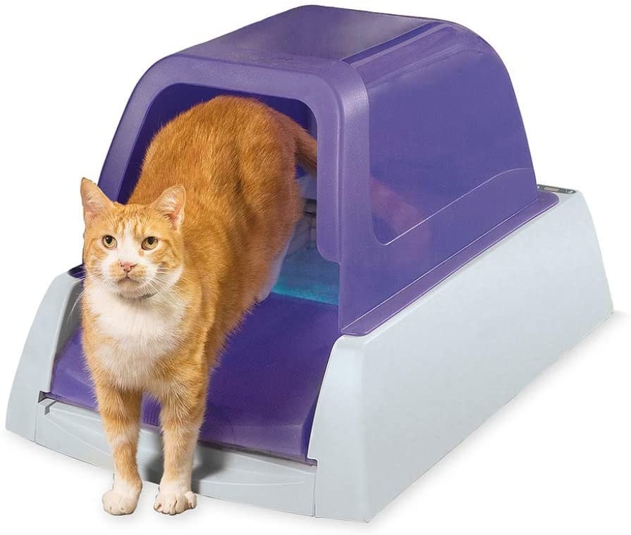 Tabby cat walking out of purple and white litter box
