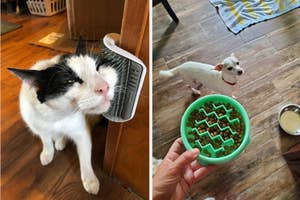 Side by side of cat using mounted wall brush and reviewer holding slow feeder dog bowl