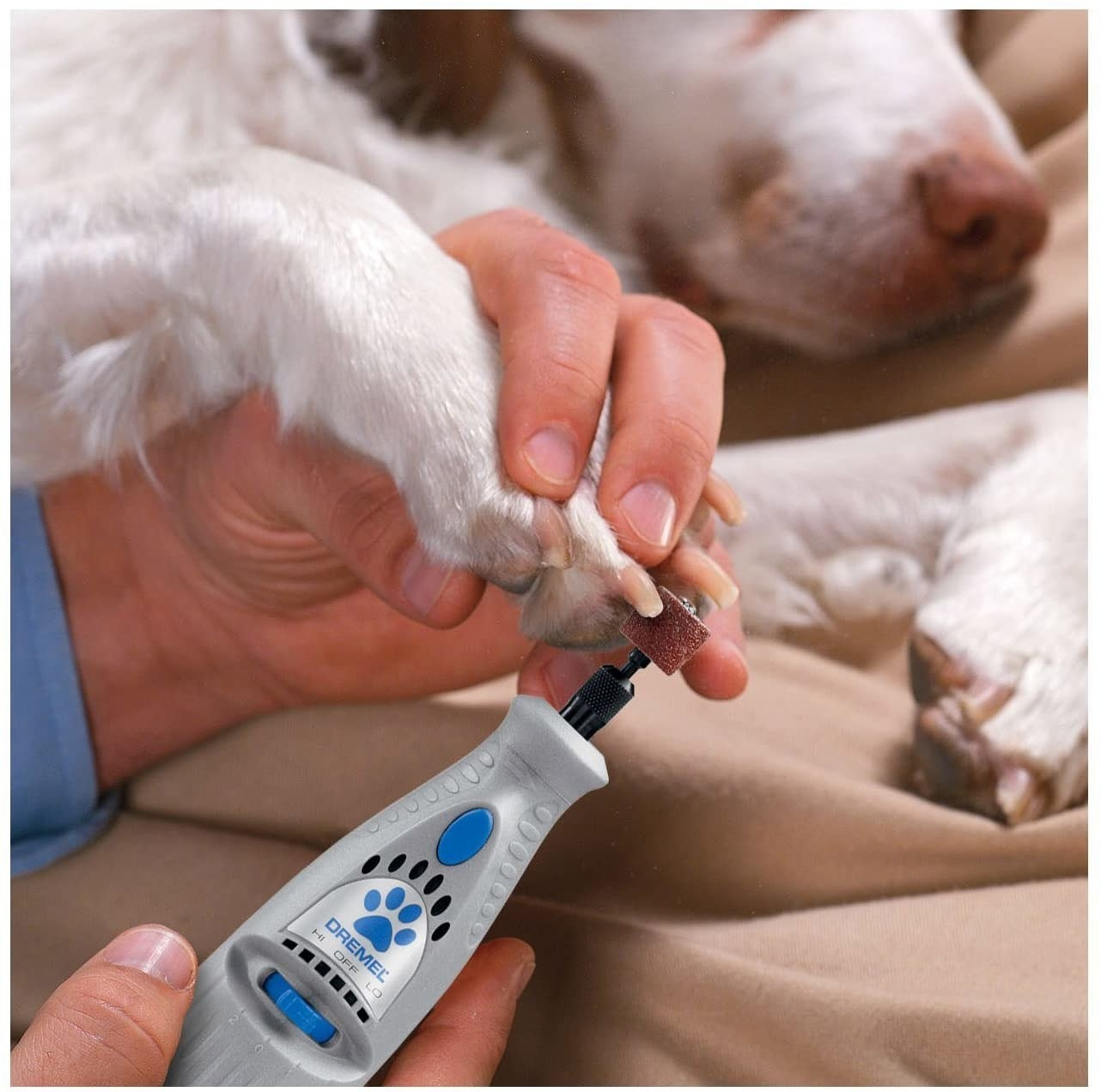 A person filing their dog's nails with the tool