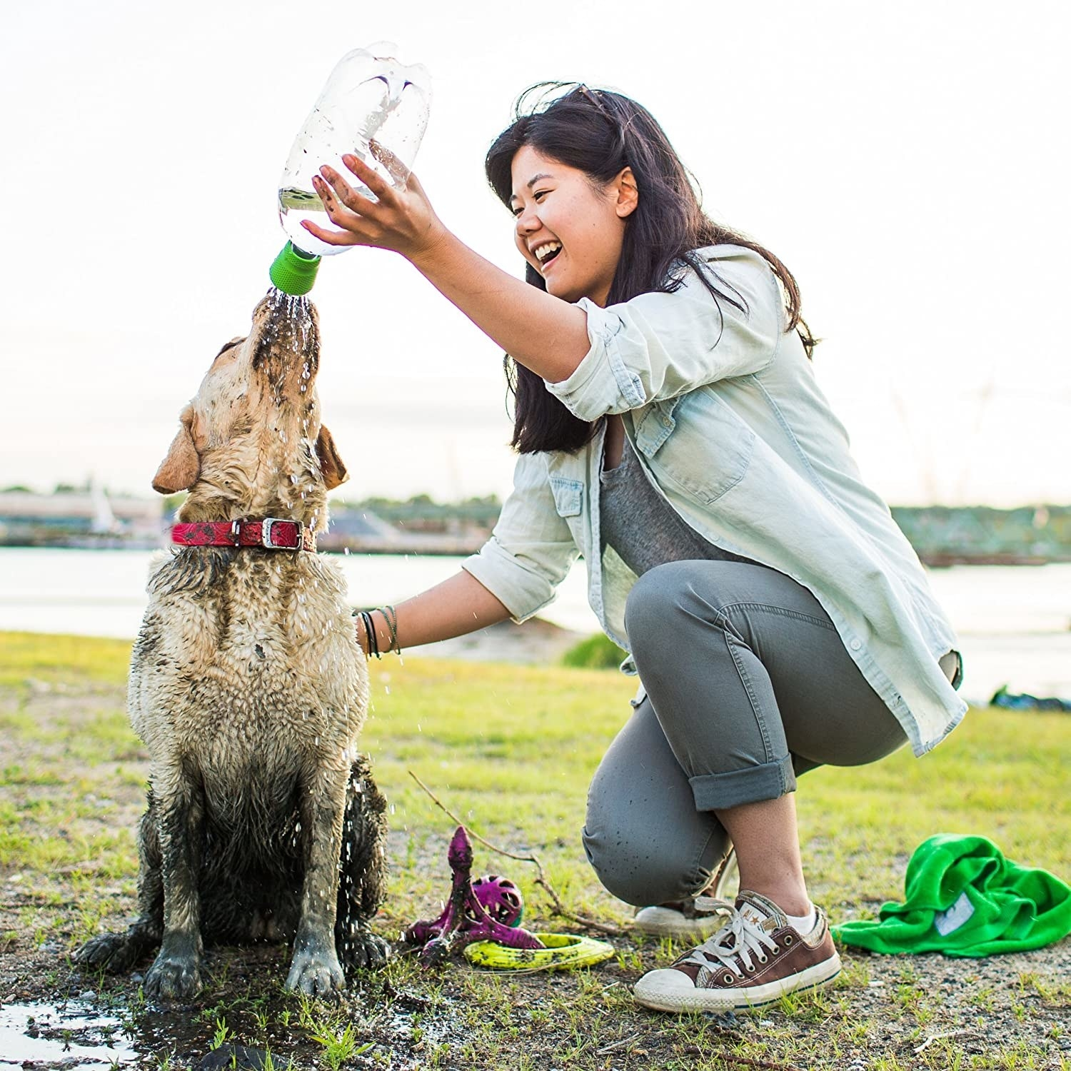A person giving their muddy dog a shower with a water bottle
