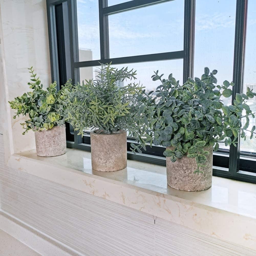 Three varied green leaf bushels in round cement-like pots