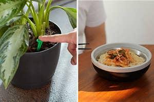left, plant spikes, right, Bonbowl
