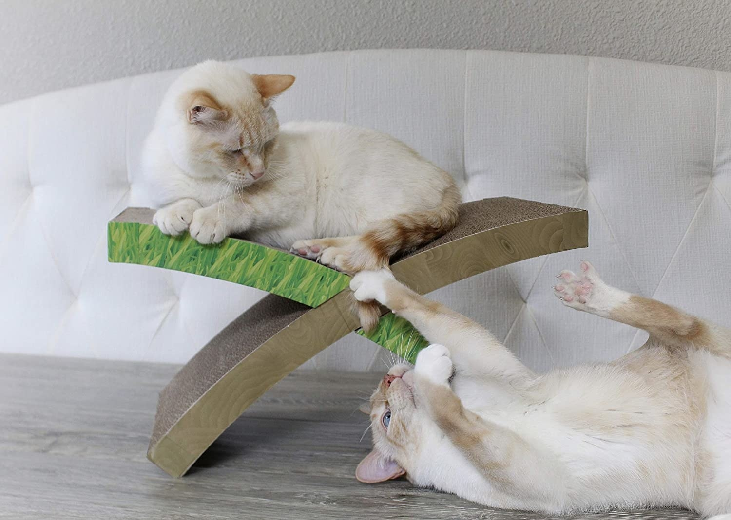 Two cats playing on X-shaped cardboard scratcher