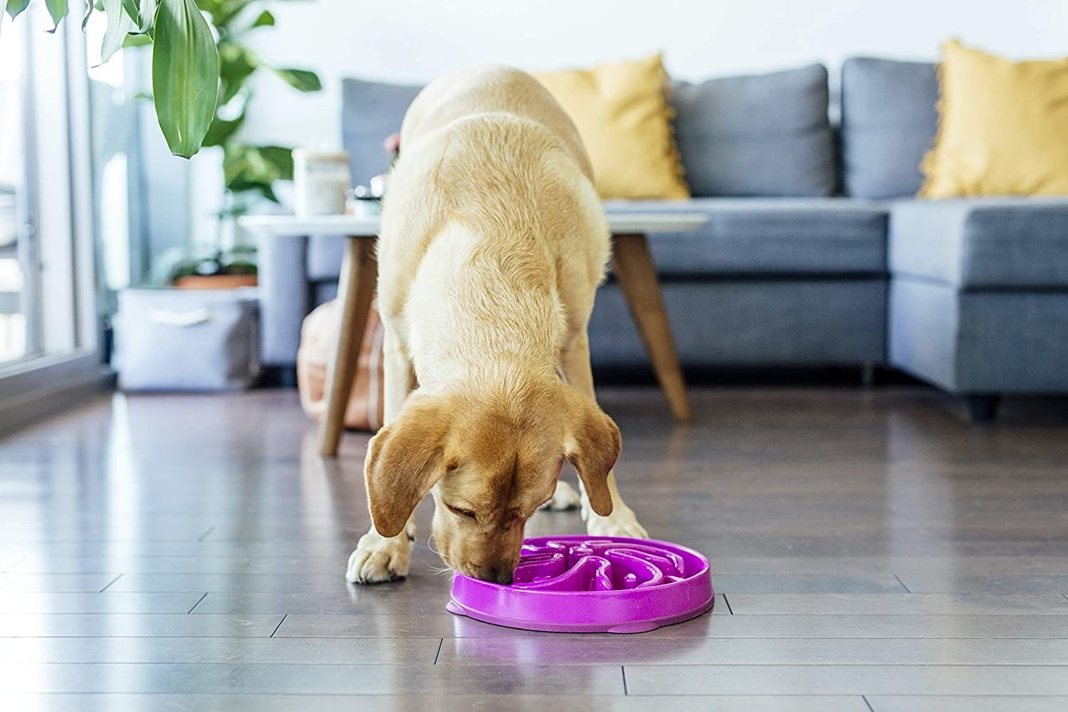 A dog eating from the puzzle bowl