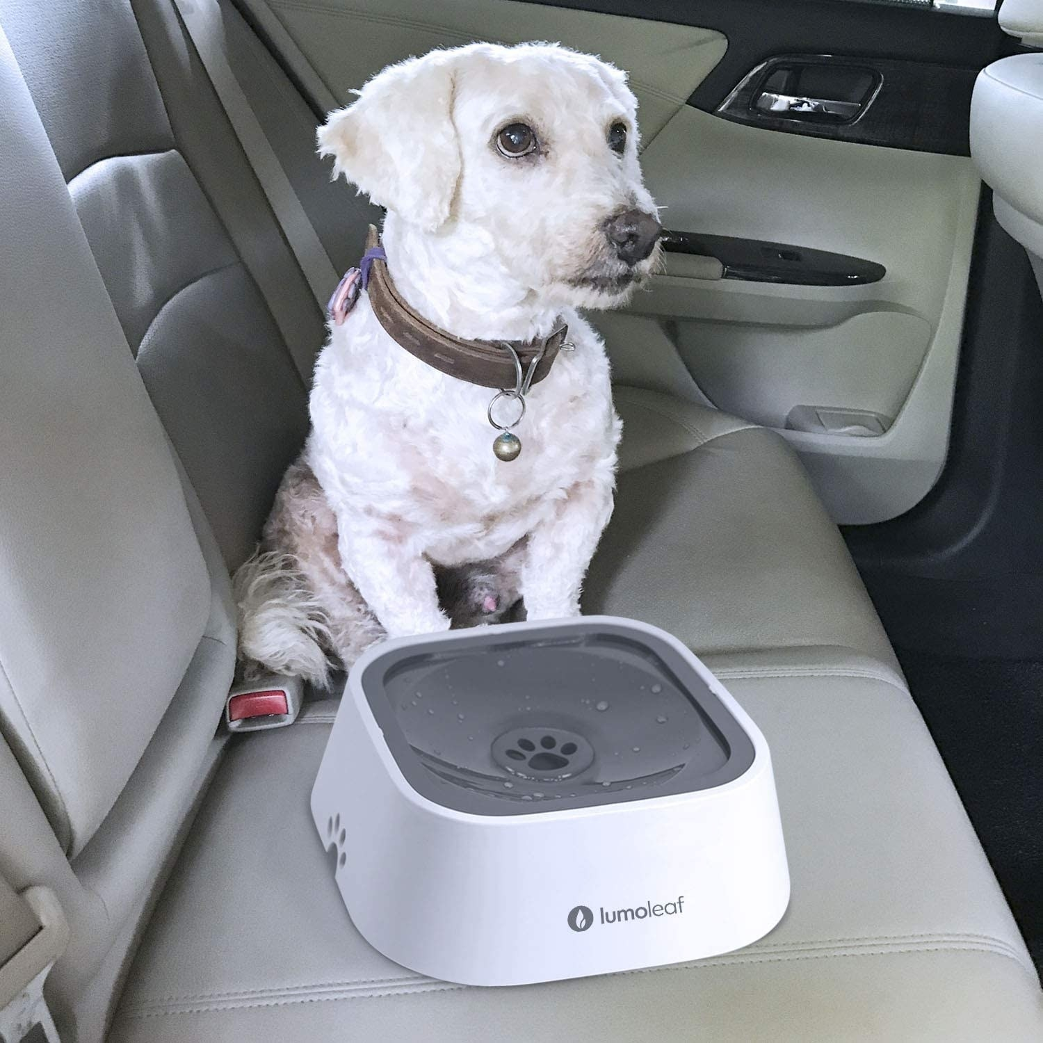 A got with the bowl in the backseat of a car