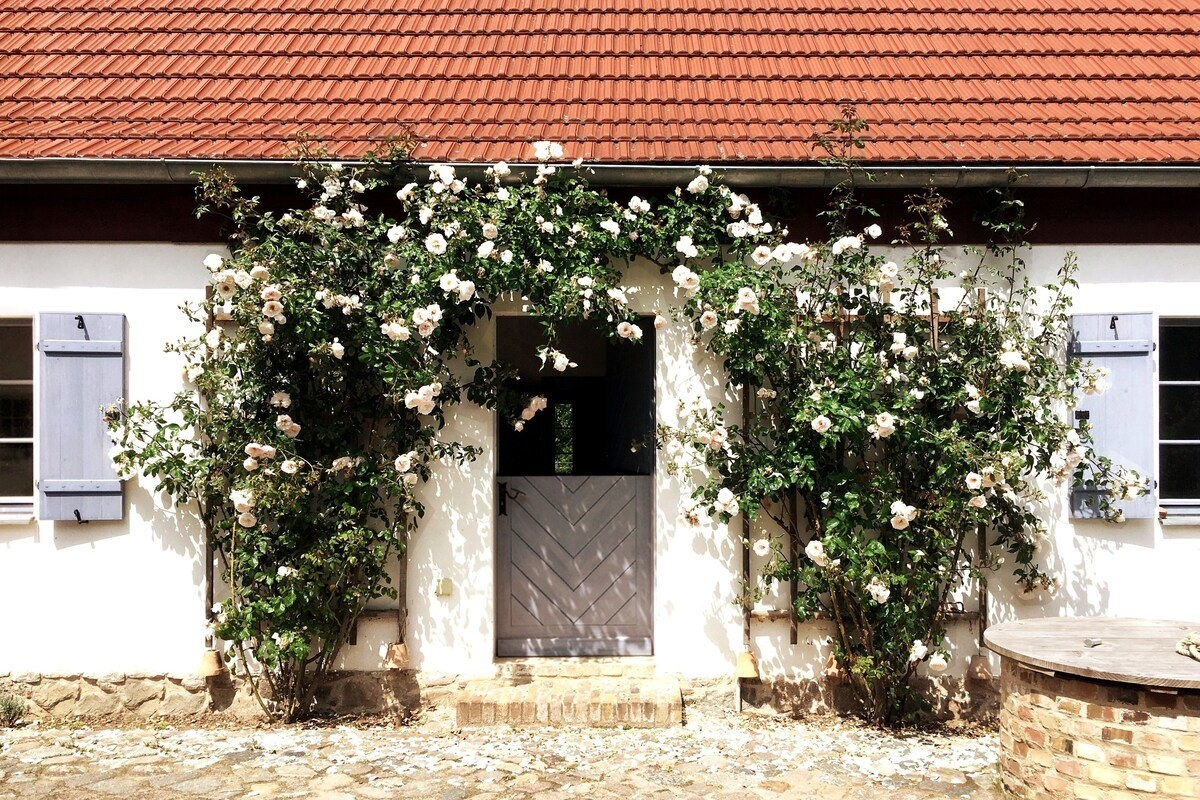 Two bougainvillea trees create an archway over the front door of a one-story cottage.