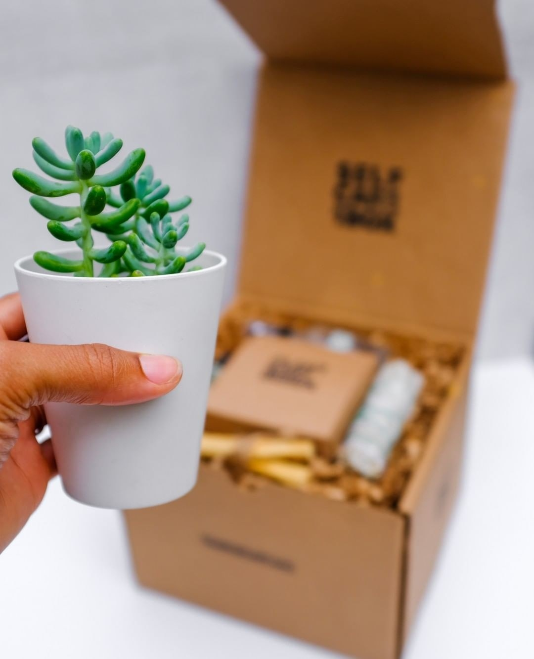hand holding succulent in a grey vase in front of an open box