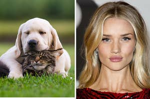 Puppy and kitten and Rosie Huntington.
