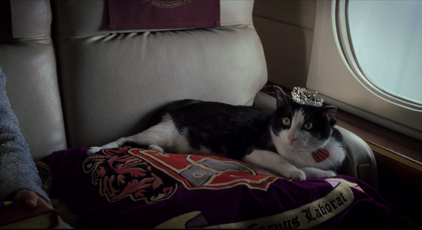 Fat Louise lying on a pillow with a tiara