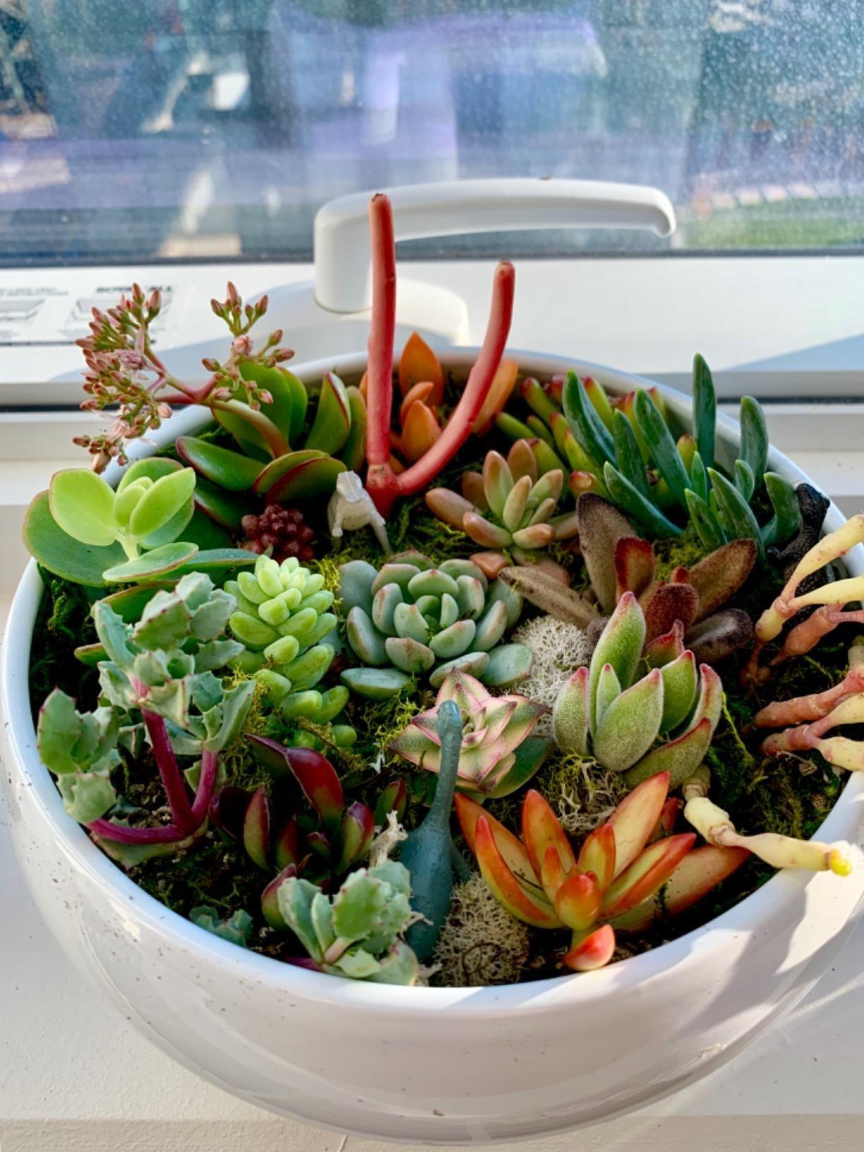 Reviewer photo of their terrarium
