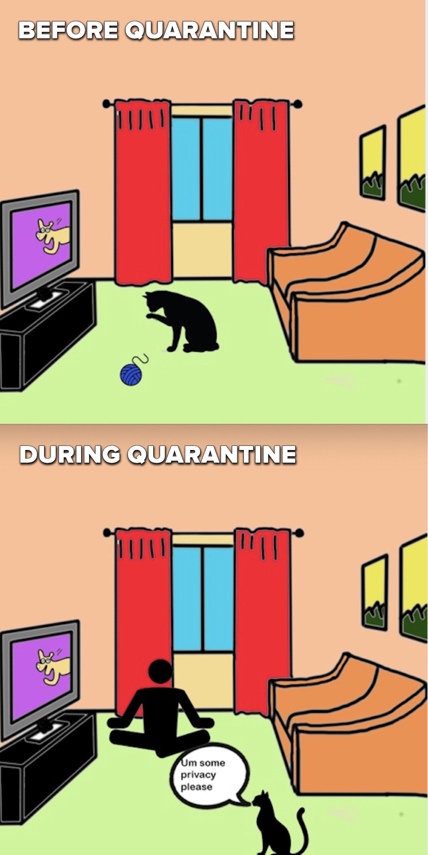 """Scene 1: A single cat is grooming itself in an empty room. Scene 2: The owner is doing yoga in the room so the cat thinks """"Um, some privacy please!"""""""
