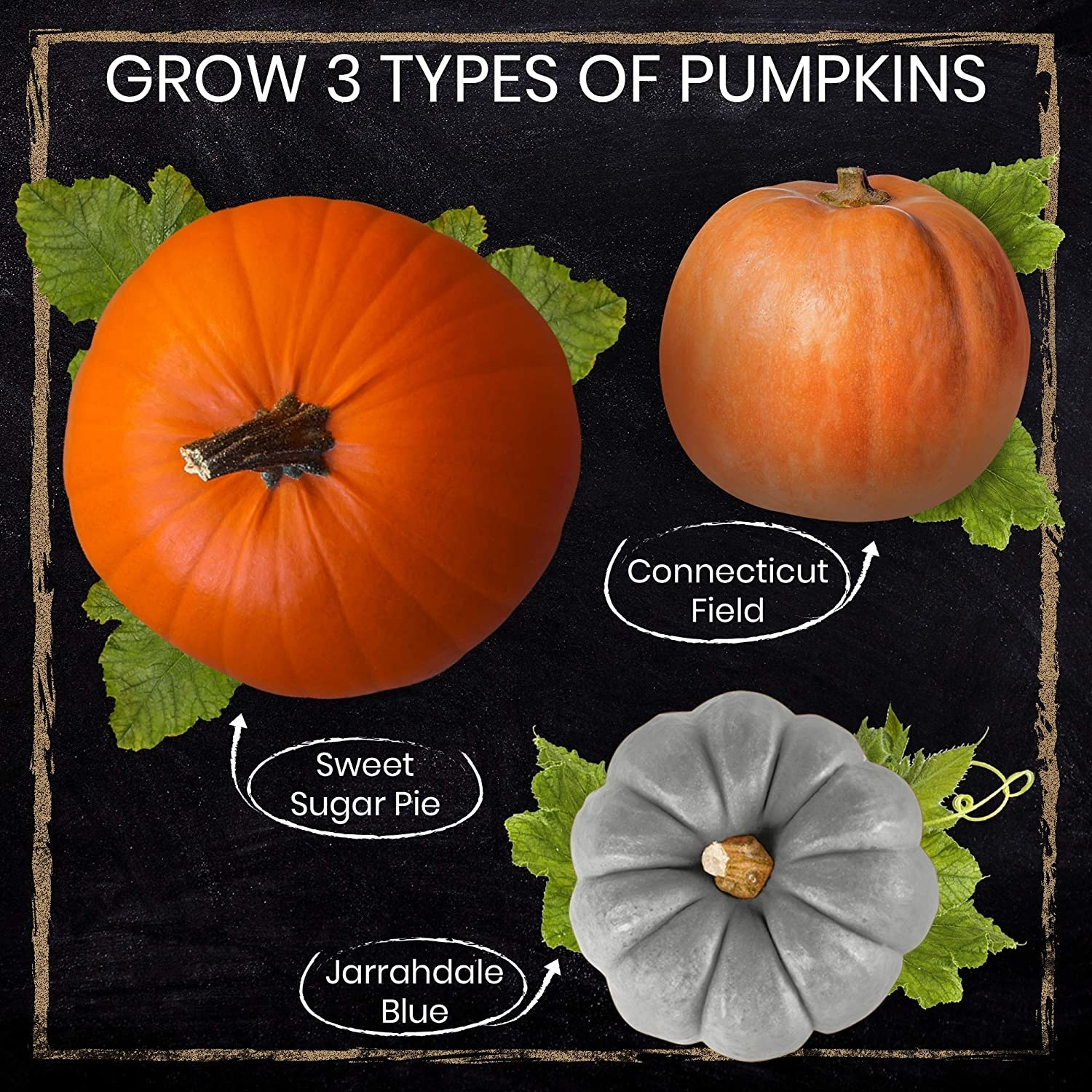 Diagram of the three types of pumpkins you can grow with the kit