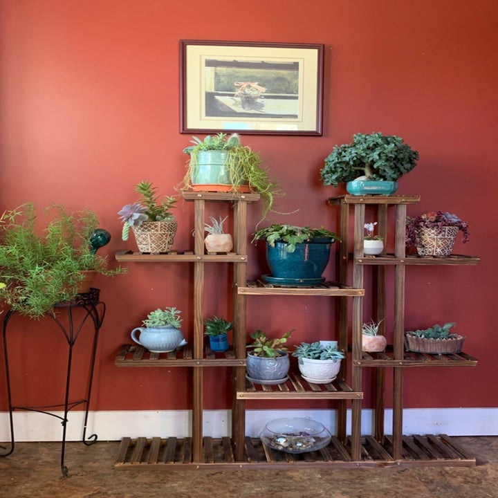 Reviewer photo of the stand holding 14 plants in varying sizes