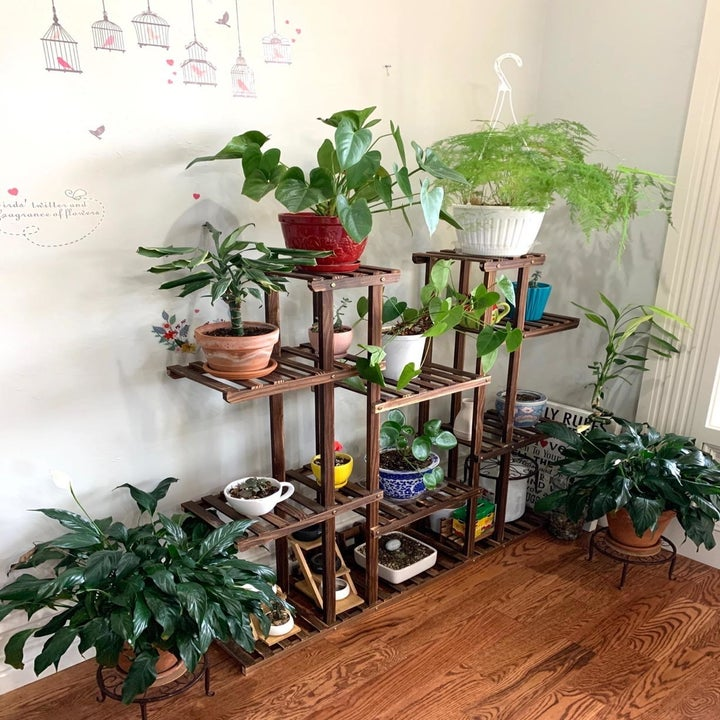 Reviewer photo of their stand holding several plants with room left over