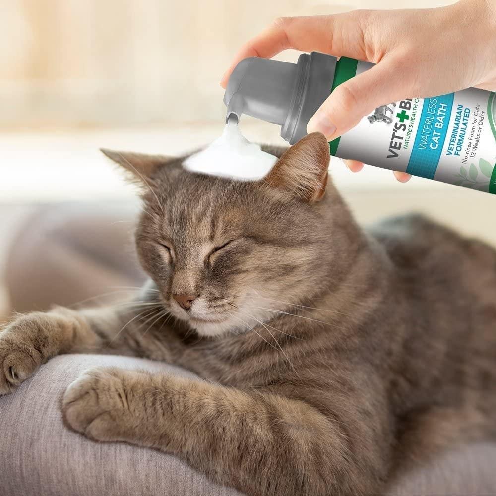 Someone spraying dry shampoo onto a cat's head