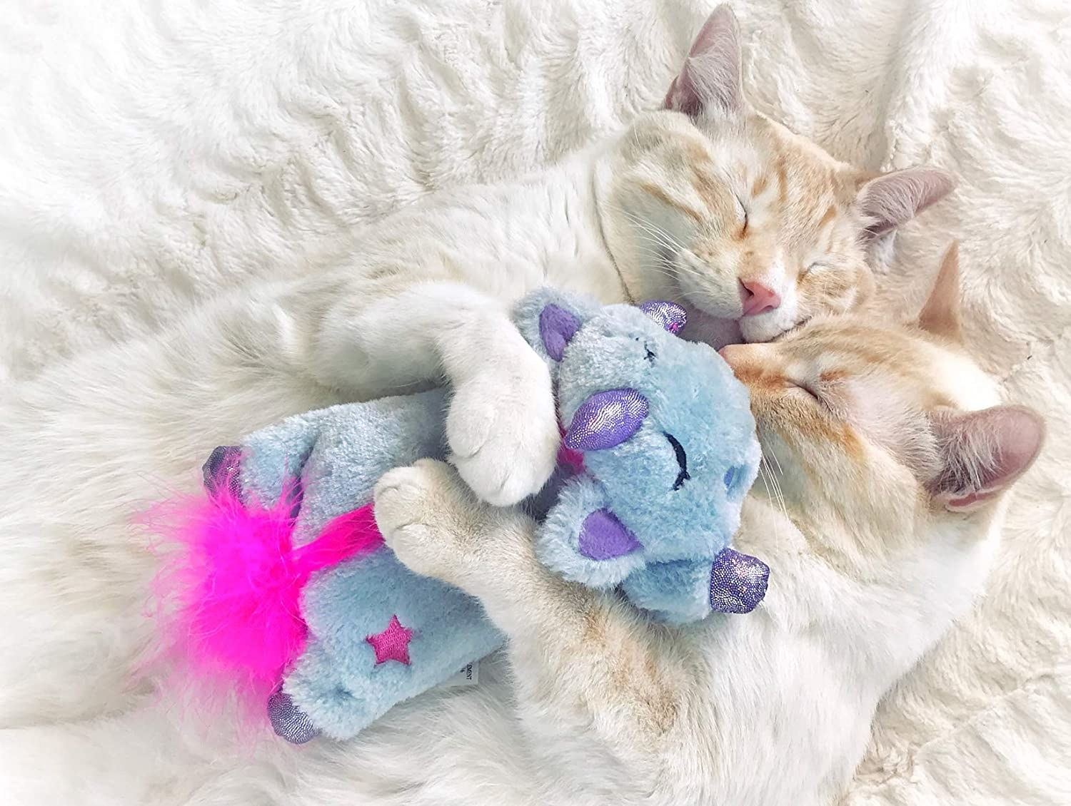 two cats cuddling the soft toy
