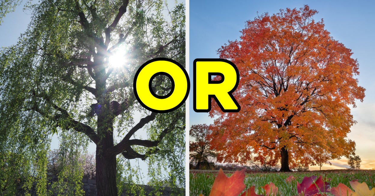 This Is Weird, But Everyone Has A Type Of Tree That Matches Their Personality — Here