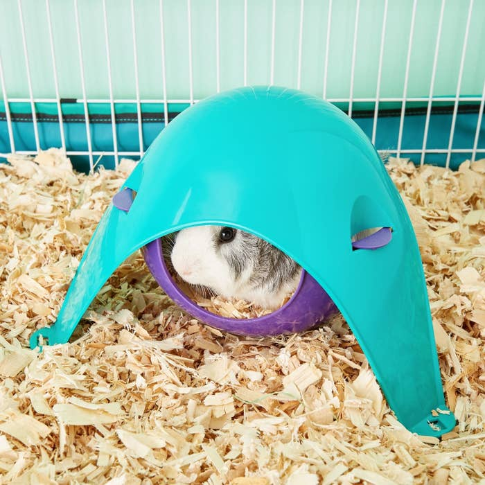 A hamster hiding in the pod, which has a hammock-like structure inside