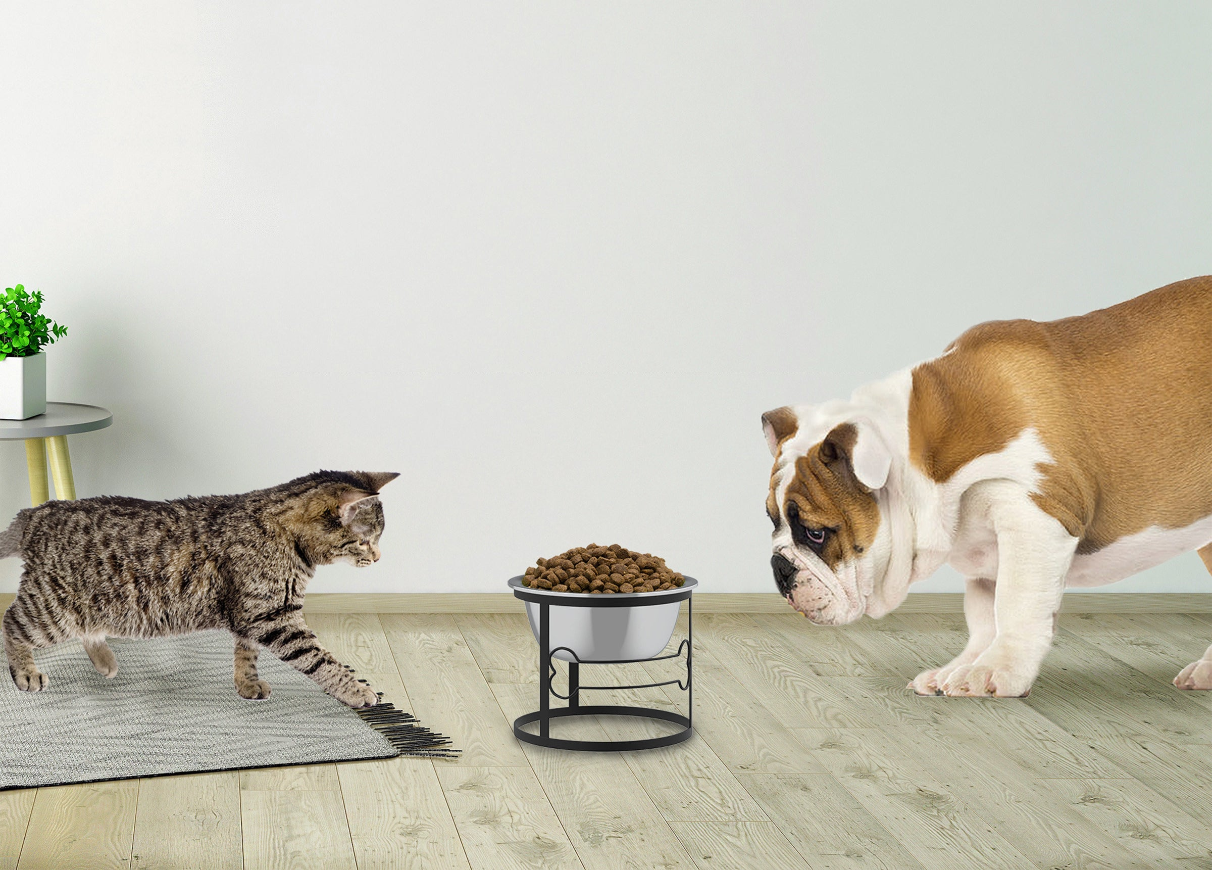 A dog and cat looking at the bowl, which is held in a black elevated frame with a bone design