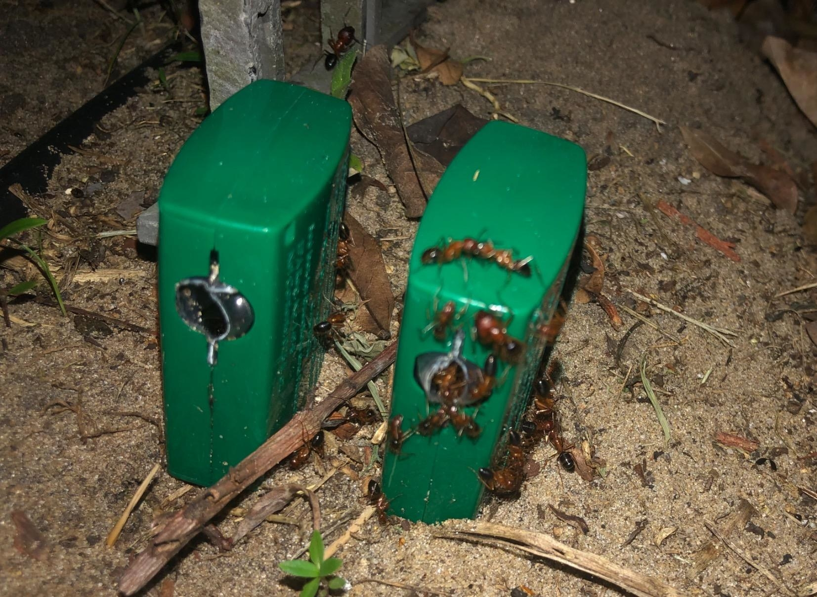 Reviewer photo of the bait traps covered in ants