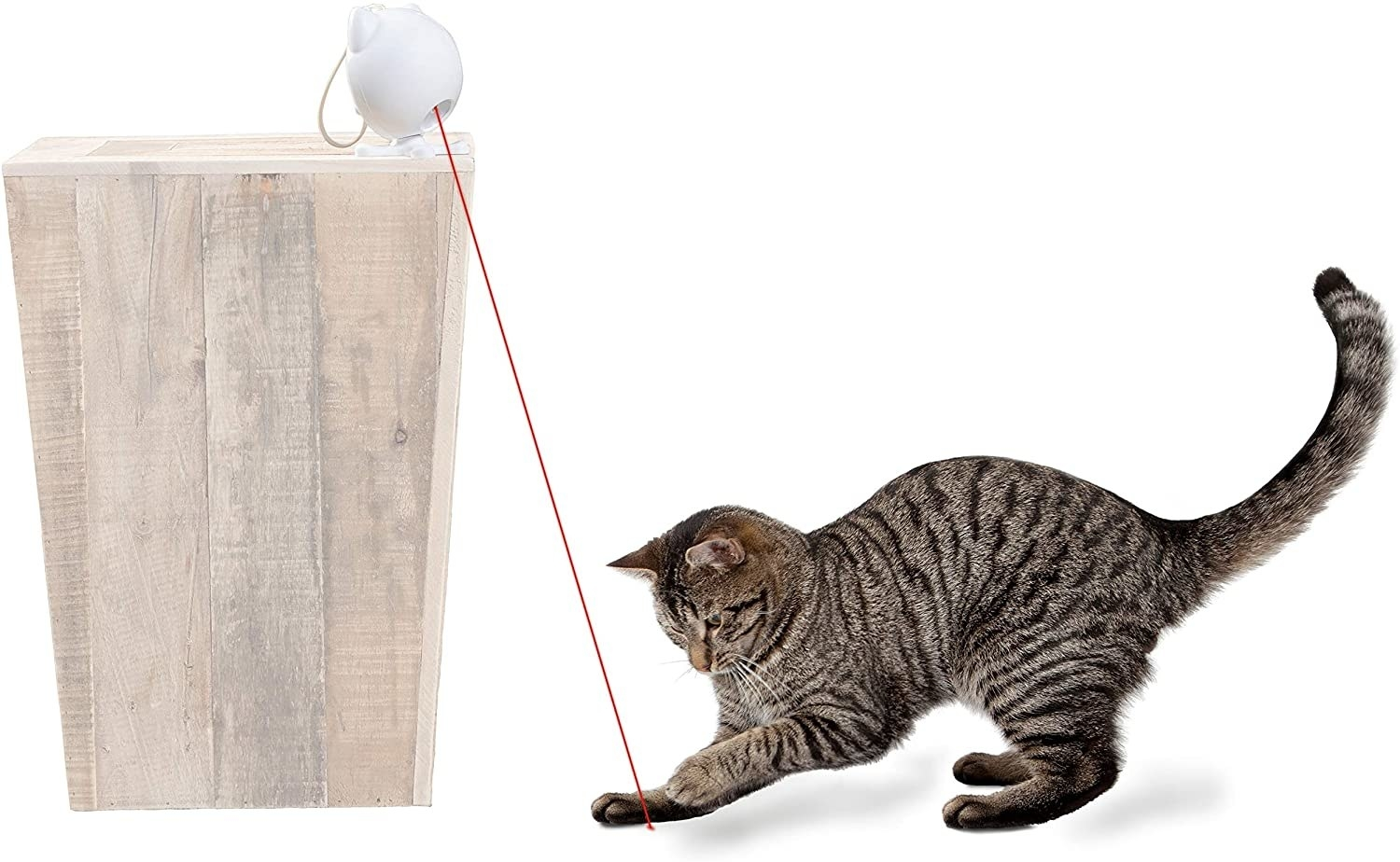 cat playing with laser toy