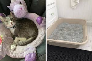 to the left: a cat cuddled in a unicorn, to the right: a litter box
