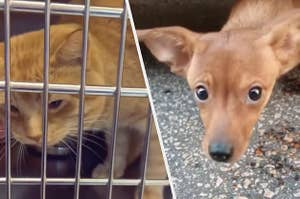 on left, cat in cage. on right, puppy looking up to camera with sad eyes
