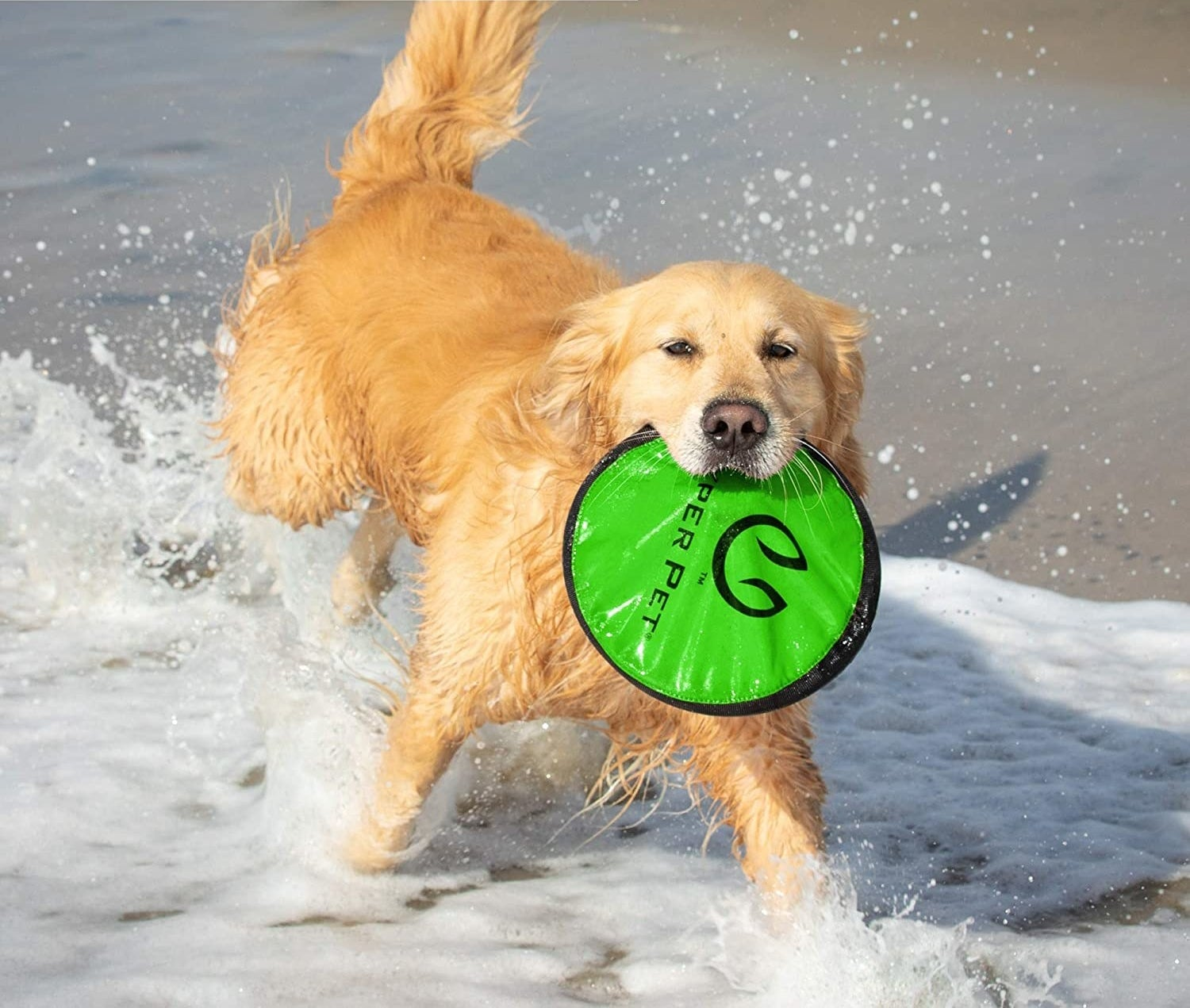 Dog holding frisbee in their mouth