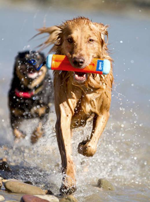 Dog running with toy in their mouth