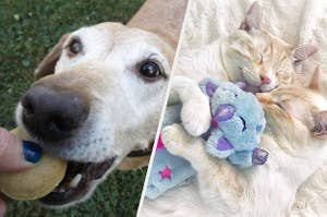 to the left: a dog eating a treat, to the right: cats snuggling a unicorn