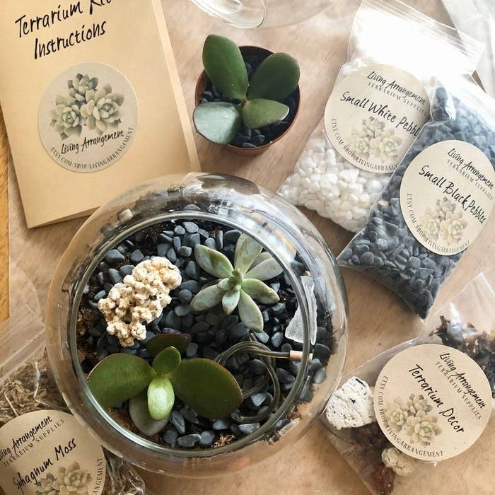 the bubble terrarium with planted succulent on a table surrounded by contents of the terrarium building kit