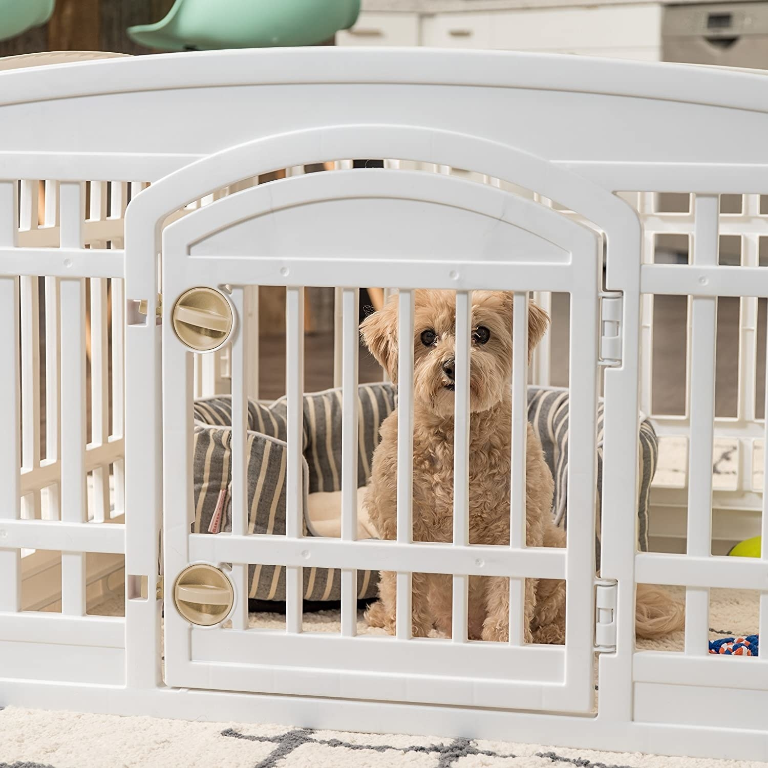 A dog in the playpen