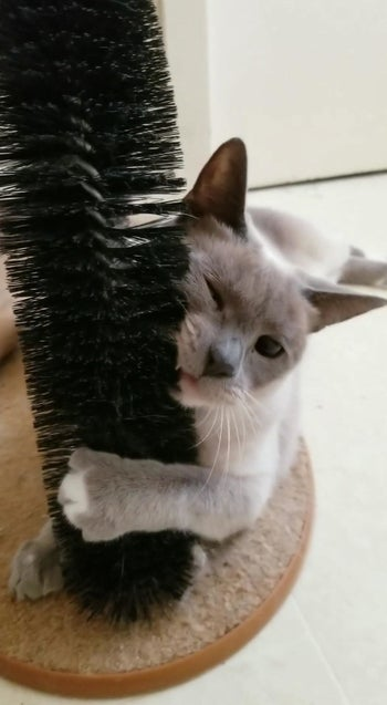 Reviewer photo of their cat rubbing its face on the brush
