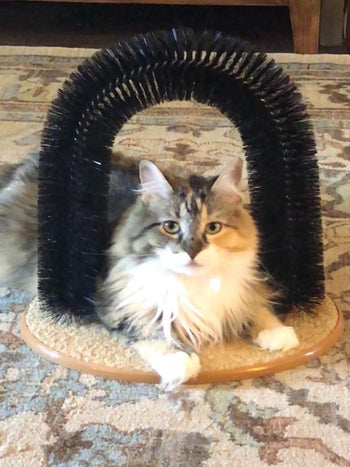 Reviewer photo of their cat sitting under the arch-shaped brush
