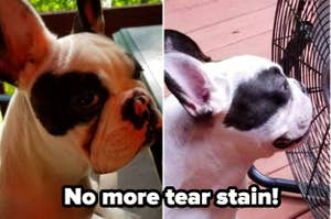 On the left, a Frenchie with a large tear stain. On the right, the dog with the stain gone. Text reads