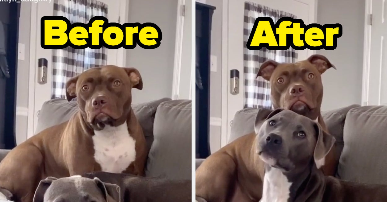 These Dogs' Reactions To Their Owners Using Their Favorite Words Are Too Pure For This World