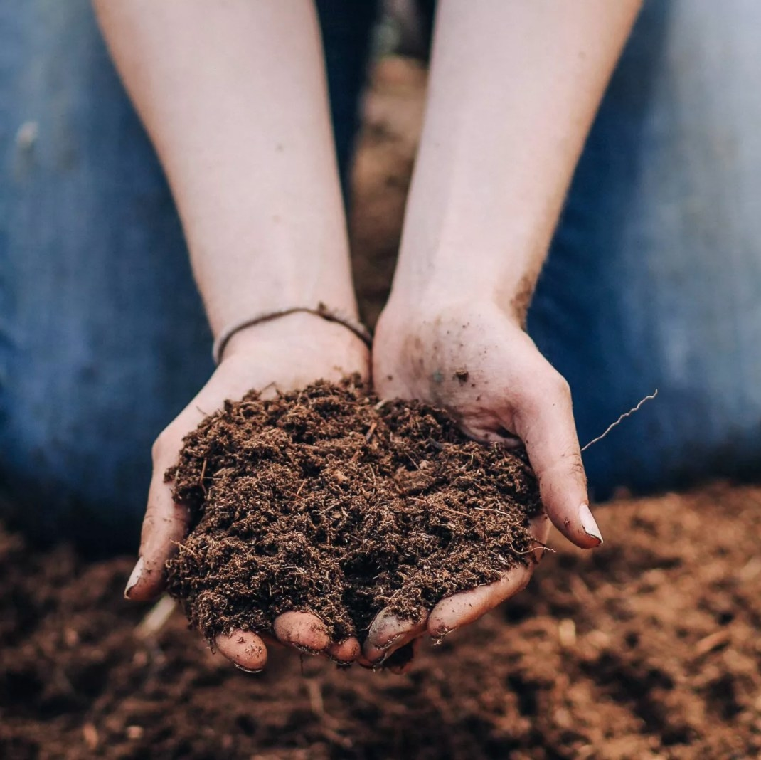 Hands holding the soil