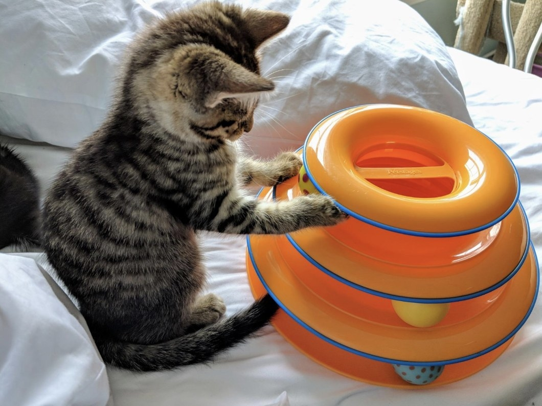 Reviewer's cat playing with the interactive toy with included balls
