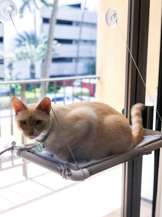 Reviewer's cat sitting on the hammock