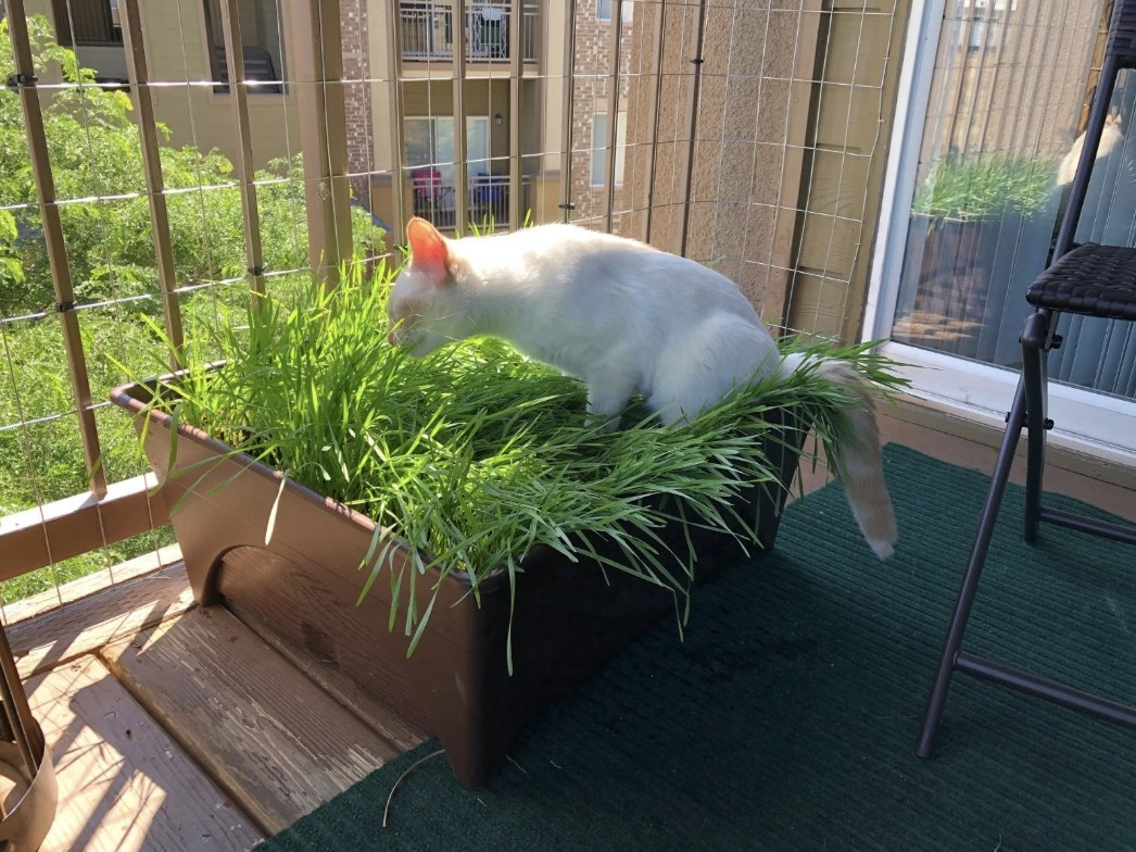 Reviewer's cat sitting in the grass