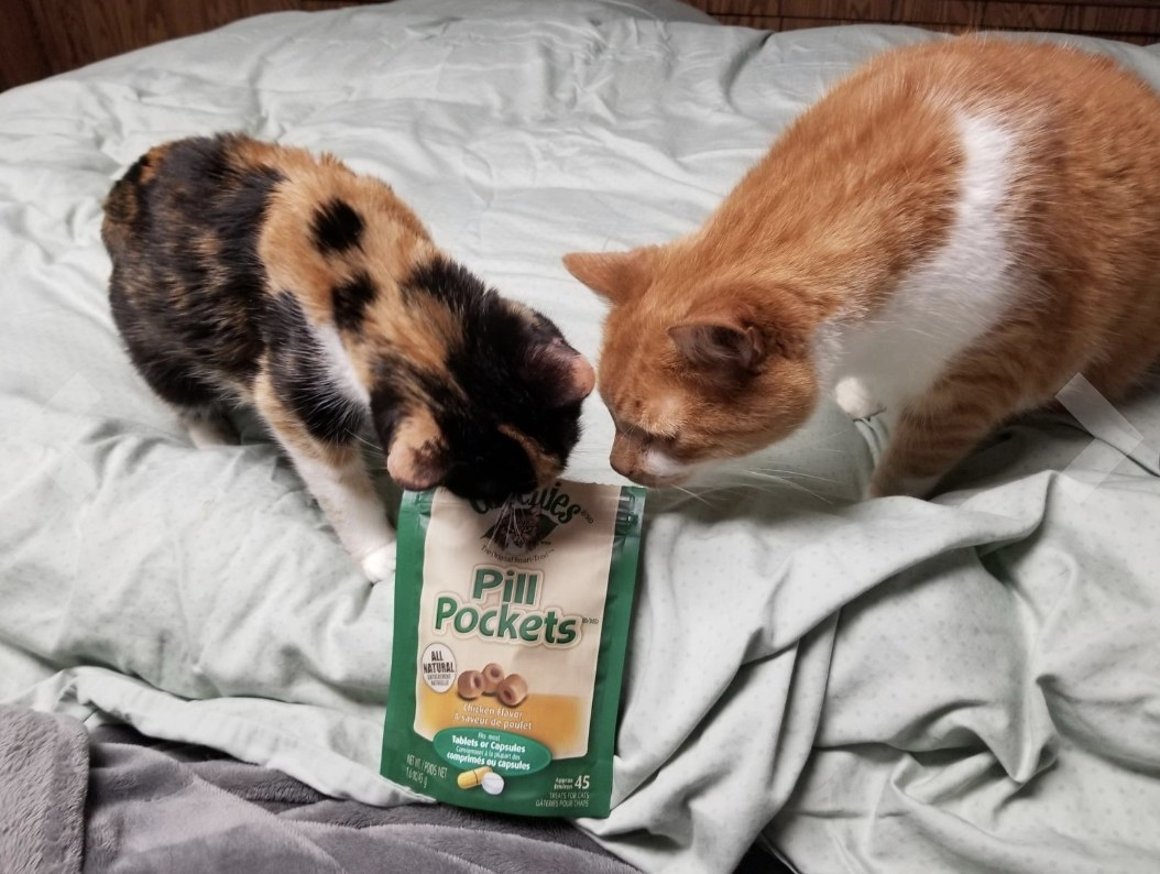 Reviewer's cats digging at the pill pocket treats