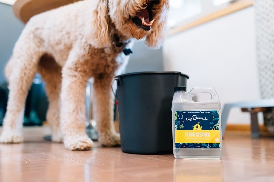 "Poodle mix dog stands next to a black mop bucket and clear container that says ""Aunt Fannie's Floor Cleaner"""