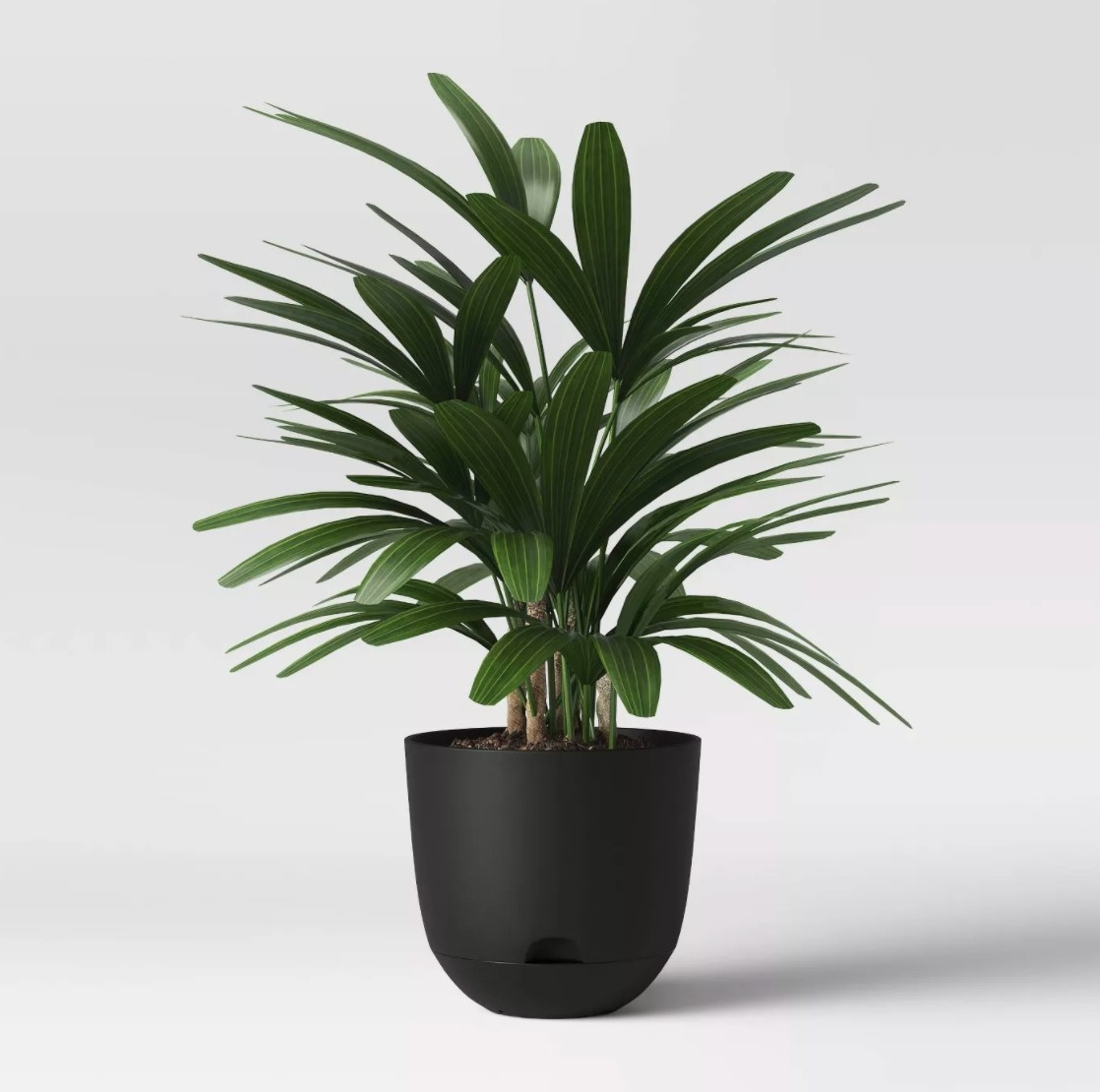 The leafy potted plant